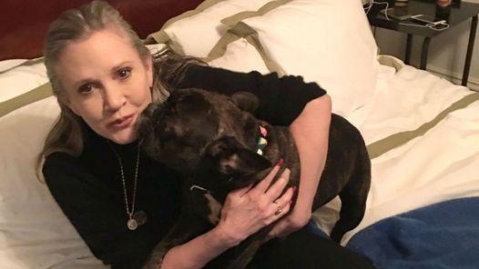 """Carrie Fisher, la Princesa Leia de """"Star Wars"""", fue internada por un infarto                              Carrie Fisher, la actriz mundialmente famosa por interpretar a la Princesa Leia en """"Star Wars"""", fue internada de urgencia... http://sientemendoza.com/2016/12/24/carrie-fisher-la-princesa-leia-de-star-wars-fue-internada-por-un-infarto/"""
