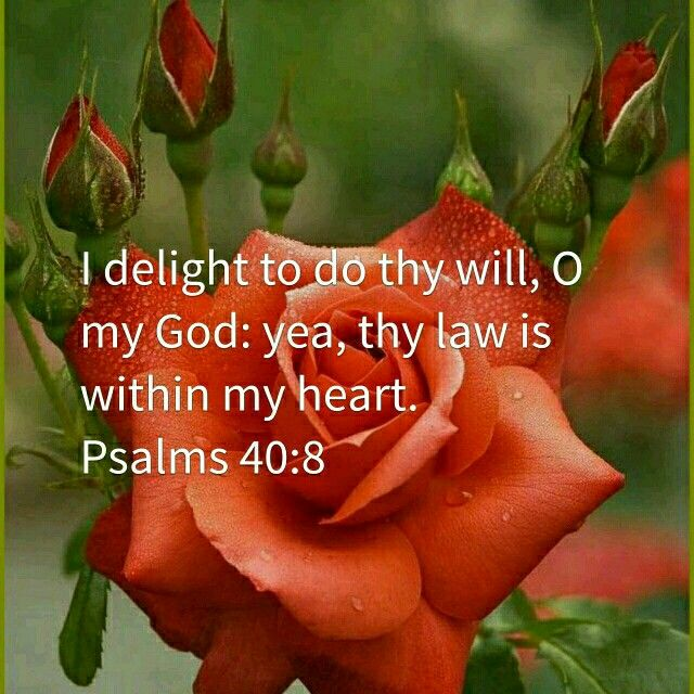 I delight to do thy will, O my God: yea, thy law is within my heart. Psalms 40:8 (KJV)