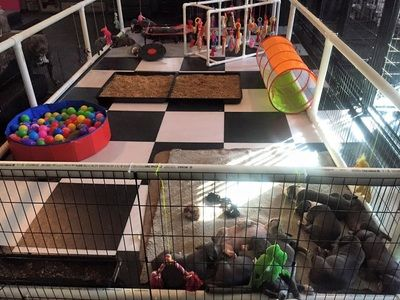 Puppy Play Area :@