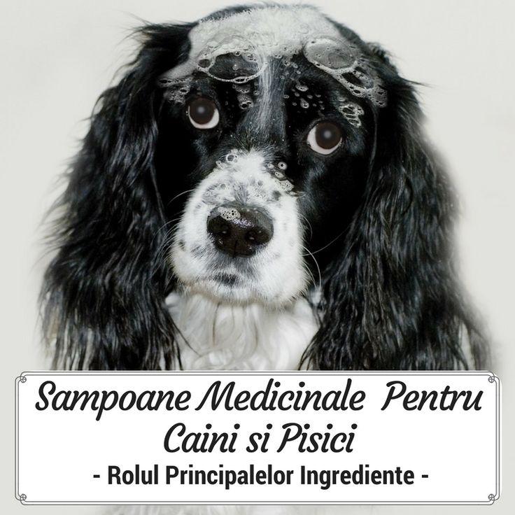 Sampoane Medicinale Pentru Caini si Pisici - Rolul Principalelor Ingrediente