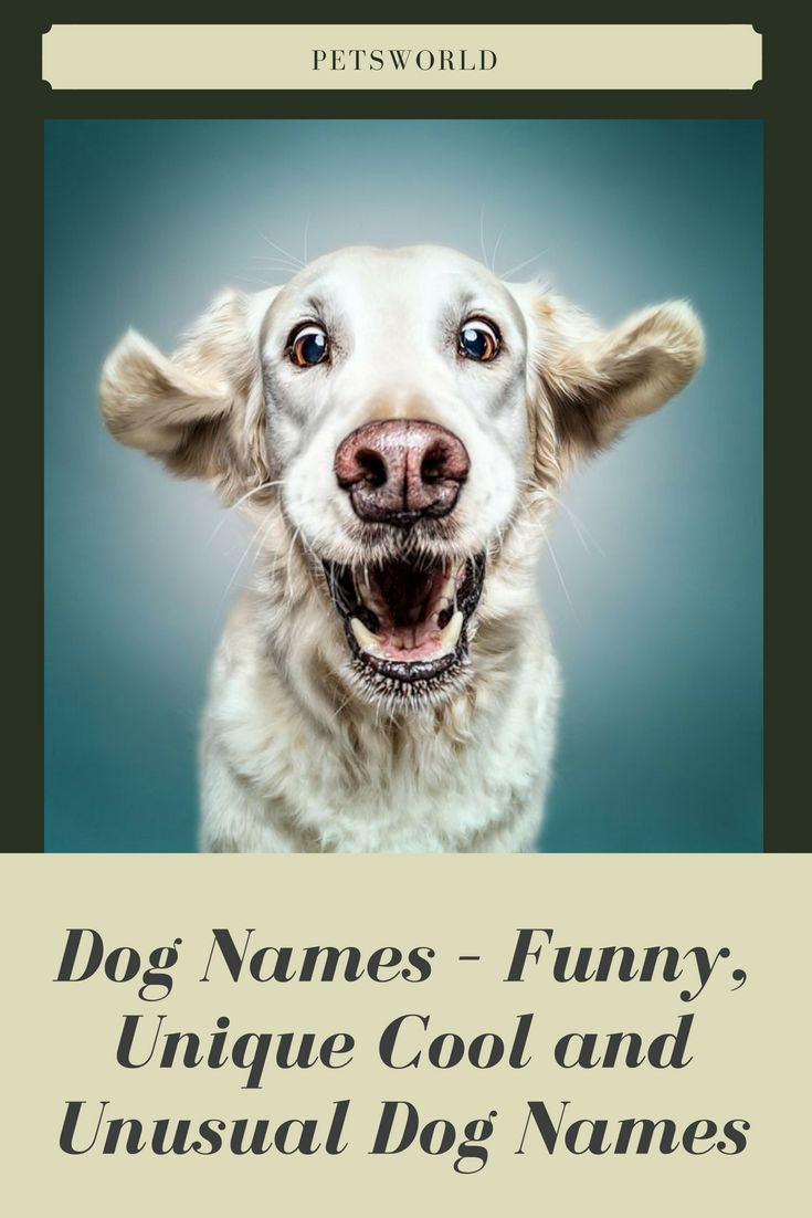 Dog Names Funny Unique Cool And Unusual Dog Names Petsworld Dogs Dogsofinstagram Dog Dogtraining Cute Cu Dog Names Dog Names Unique Unusual Dog Names