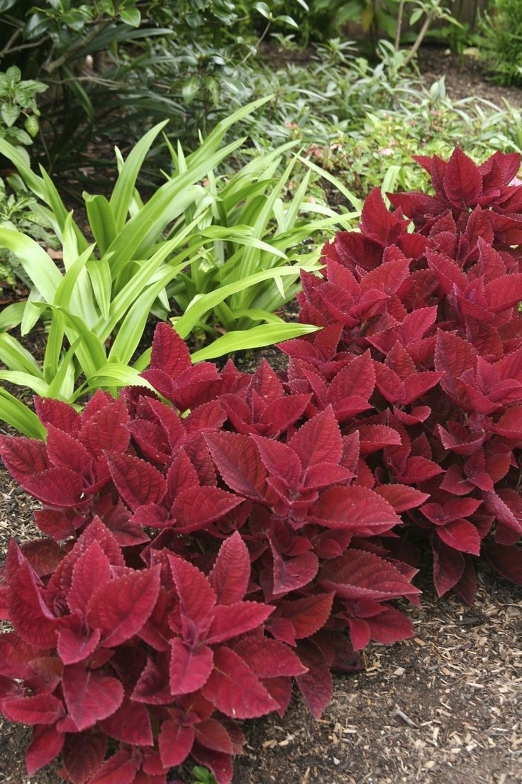 Strong colour contrast   GardenDrum  Design Robin Powell