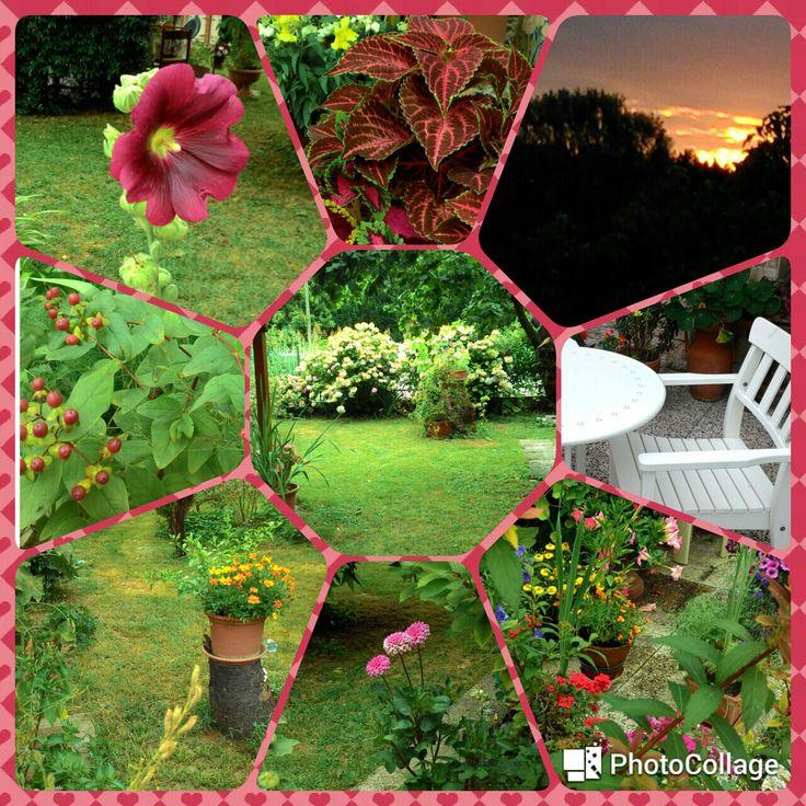 Il mio giardino.