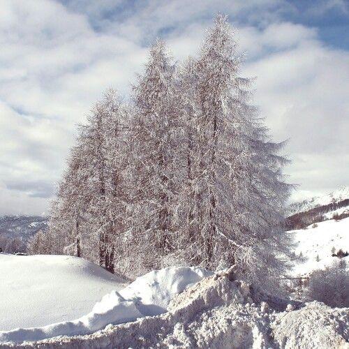 alberi di Sestriere