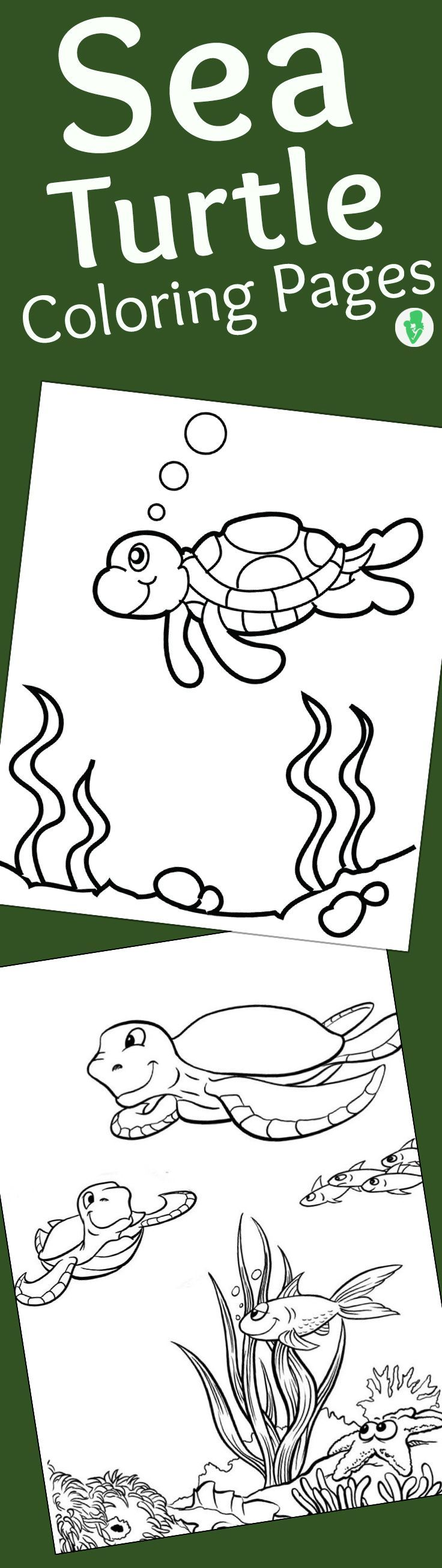 the 25 best turtle coloring pages ideas on pinterest kids