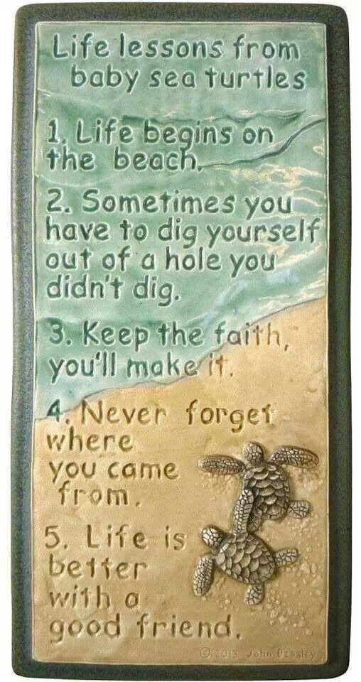 Turtle philosophy
