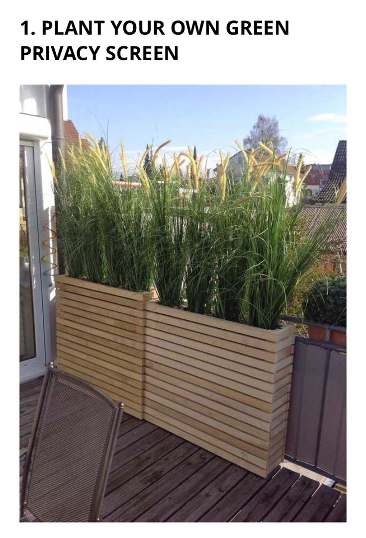 Effective summer privacy planting eg red mondo grass for Tall grass plants for privacy