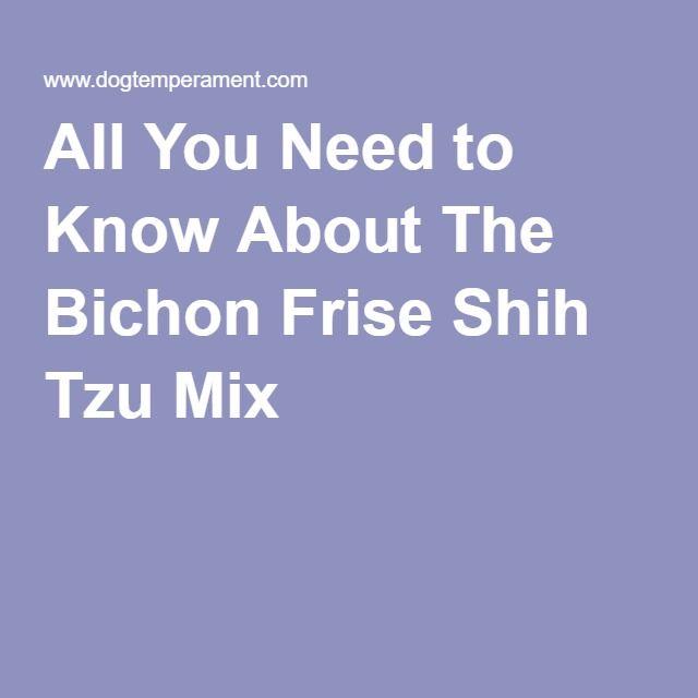 The Bichon Frise Shih Tzu Mix, Hybrid Breed, Teddy Bear Dog