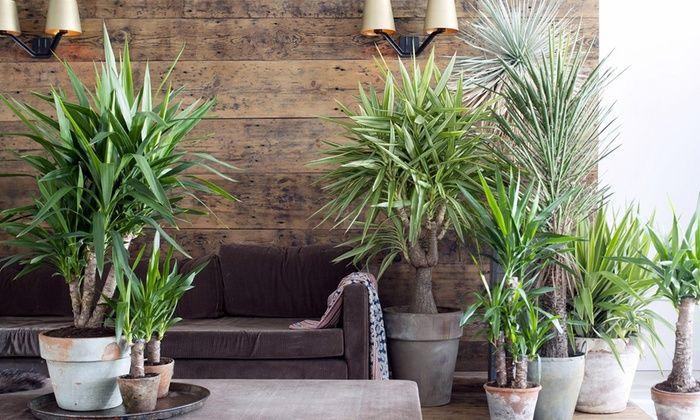 Opinioni Coupon Prodotti per il Terrazzo e il Giardino