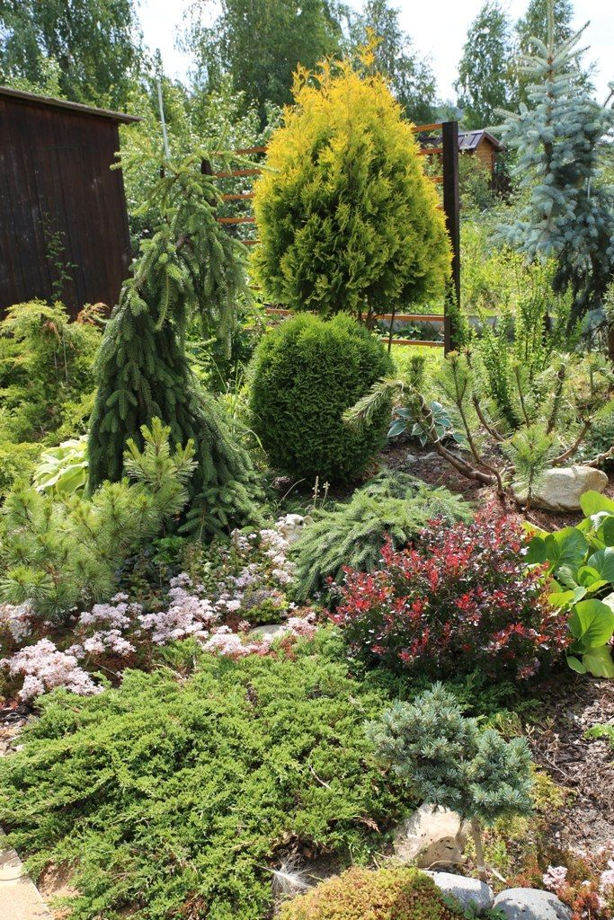 1000 Ideas About Evergreen Garden On Pinterest