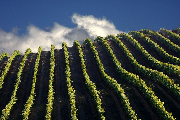 Tokara Wine Estate - Stellenbosch