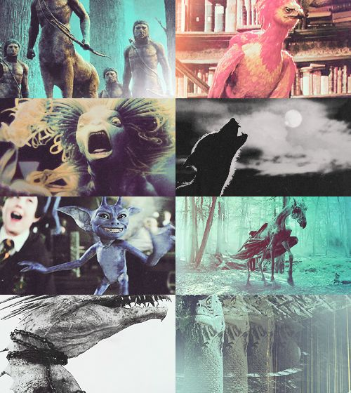 """""""Imperfect understanding is often more dangerous than ignorance."""" - Fantastic Beasts and Where to Find Them"""