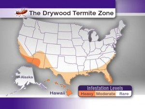 Best Drywood Termites Ideas On Pinterest Fire Ant Killers - Us termite map