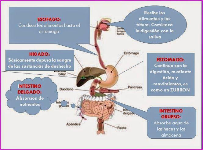 ESQUEMAS TEMARIO DE AUXILIARES DE ENFERMERÍA PARA OPOSICIONES: Alimentación y nutrición