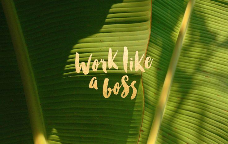 Green palm leaves botanical Work Boss desktop wallpaper background
