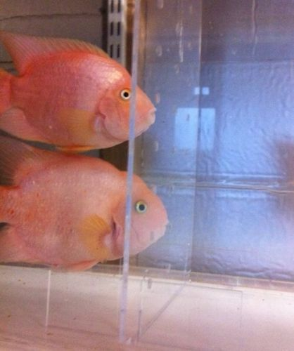 The 363 best images about ebay gumtree on pinterest for Fish tank dividers