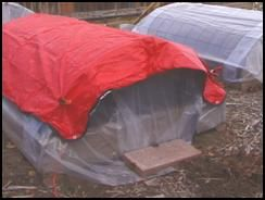 Plastic row cover with space blanket