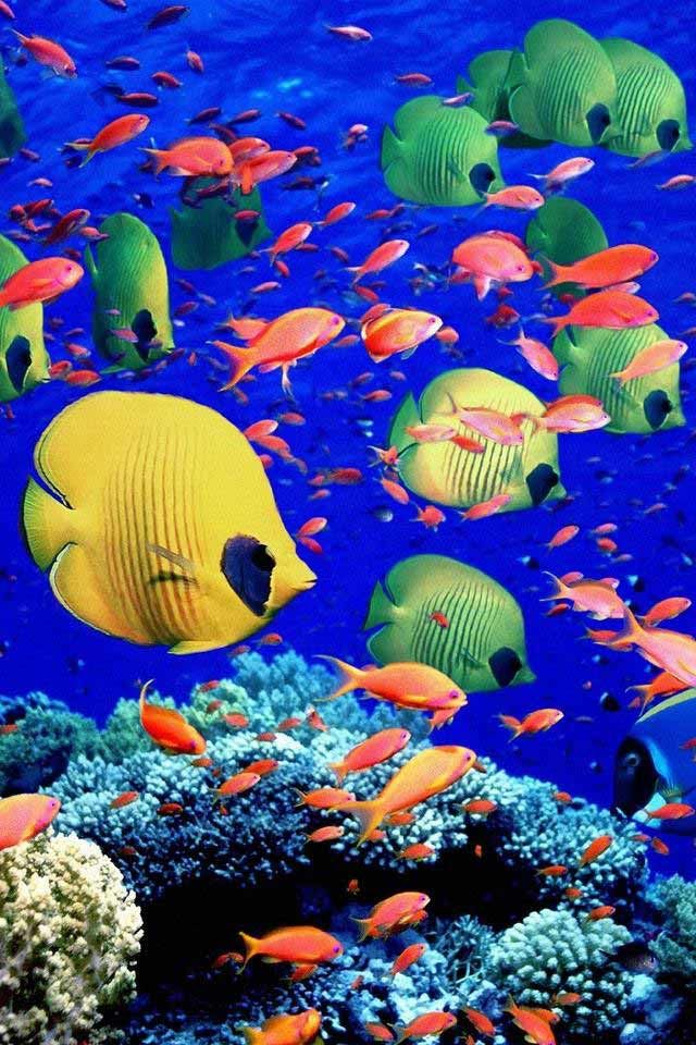 fish-cool-beautiful-colorful-creative-awesome-stunning-iphone4-wallpapers-iphone... | Abstract HD Wallpapers 3