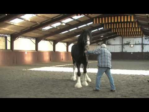 Shire Horse Society International Stallion Inspection
