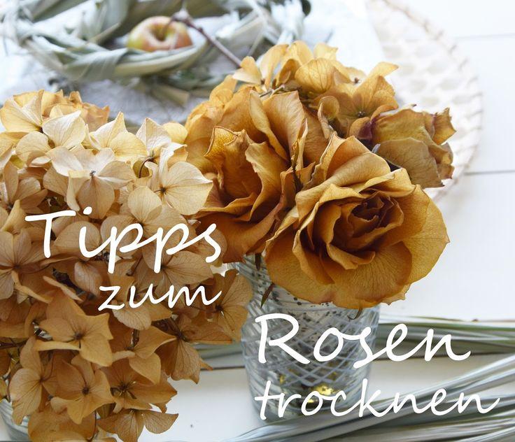Tipps und Tricks für das Trocknen von Rosen mit fluffig weichen Blättern…