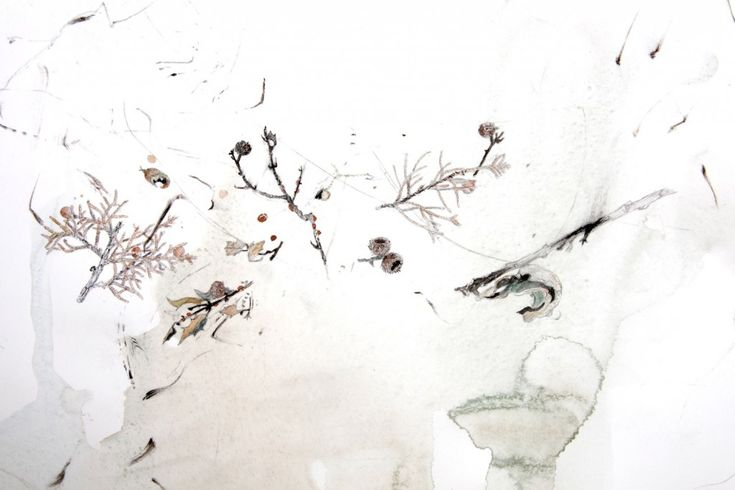 An Inventory of the Plants of the Maquis, 2008 Found charcoal, graphite and watercolour on paper 50 x 77cm