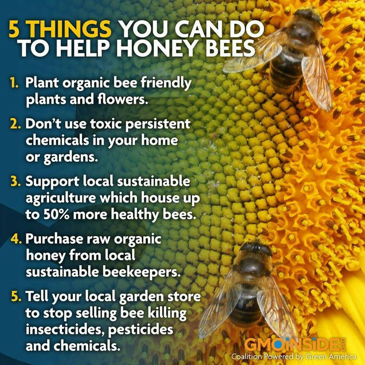 How to help honey bees Bees Pinterest Honey bees, We