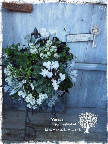ホワイト&ブラックなハンギング の画像|寄せ植えとハンギングバスケットのはな*いとし*こいし ~川崎市宮前区で日々制作しています~