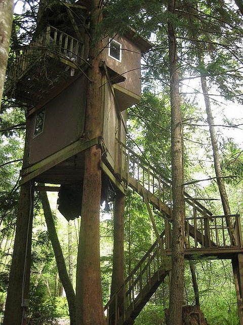 Future Tree Houses 823 best treehouses images on pinterest | treehouses, architecture