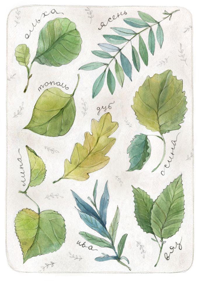 Просмотреть иллюстрацию Ботаника из сообщества русскоязычных художников автора Мария Леман в стилях: Графика, нарисованная техниками: Акварель.