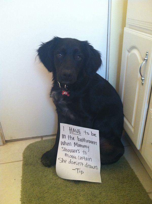 Shamed Dog | Funny Dog Shaming Pictures - Page 9