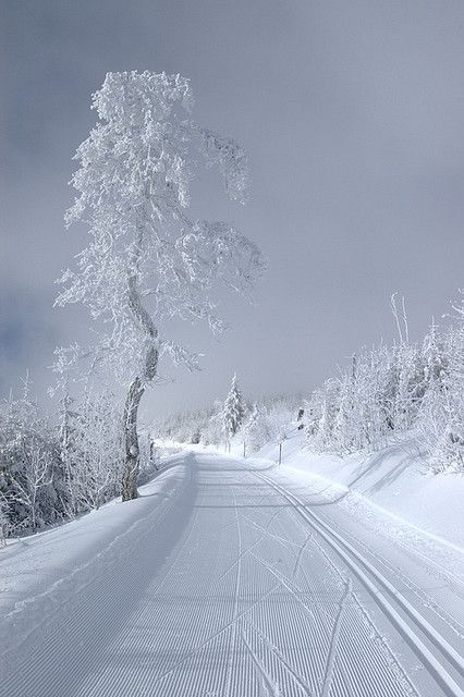 I'd love to be walkin' down this snowy lane! Love all that white on white!!