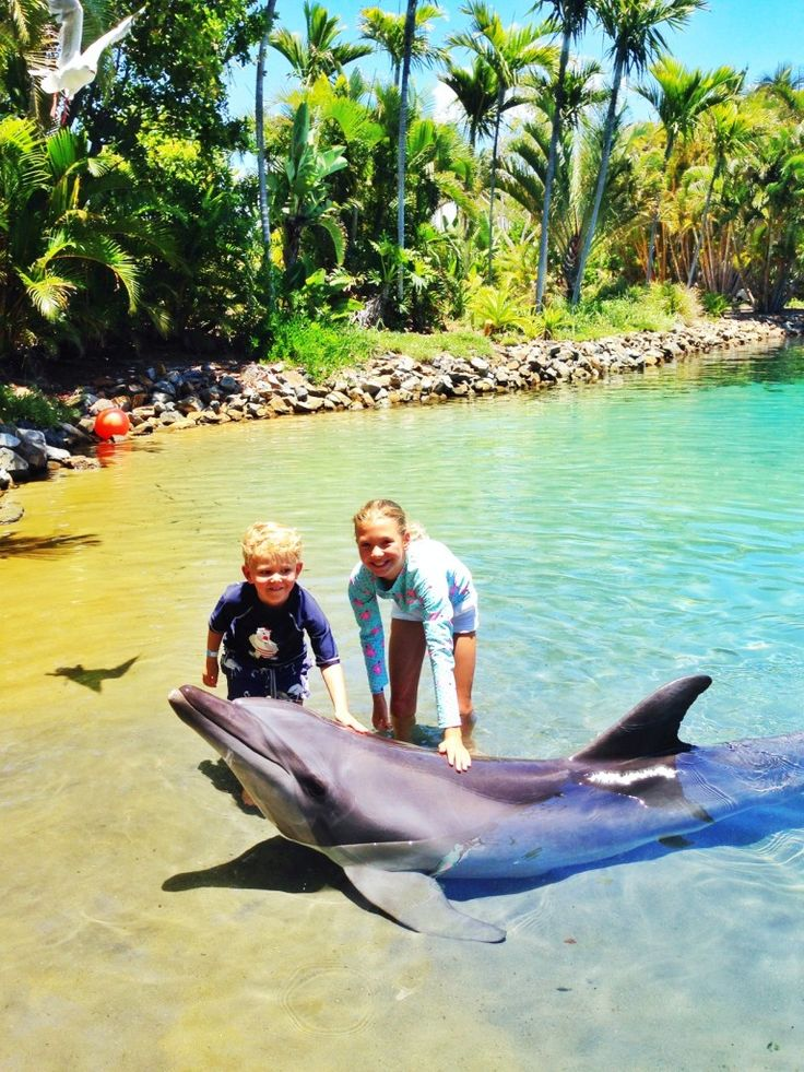 Dolphin Experience at Seaworld Gold coast Australia via The Best Of Gold Coast For Families – Summer/Autumn 2015 - The Lux Traveller