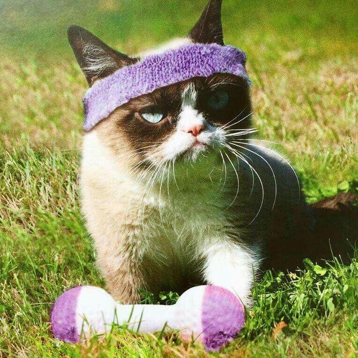 """Work it out. NOOOOO!!"" TeamGrumpy Grumpy cat meme"