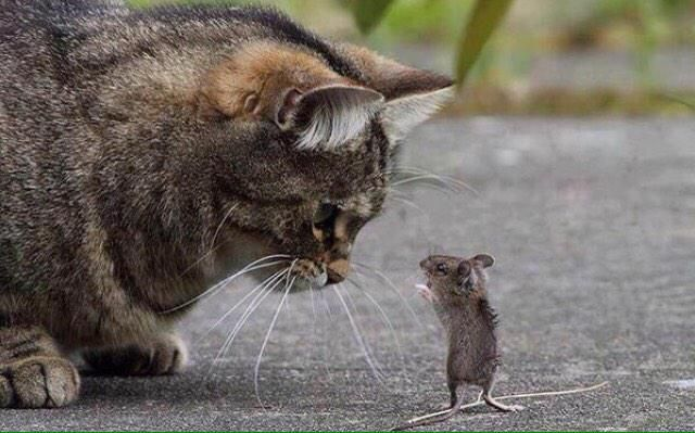 When I see a mouse......