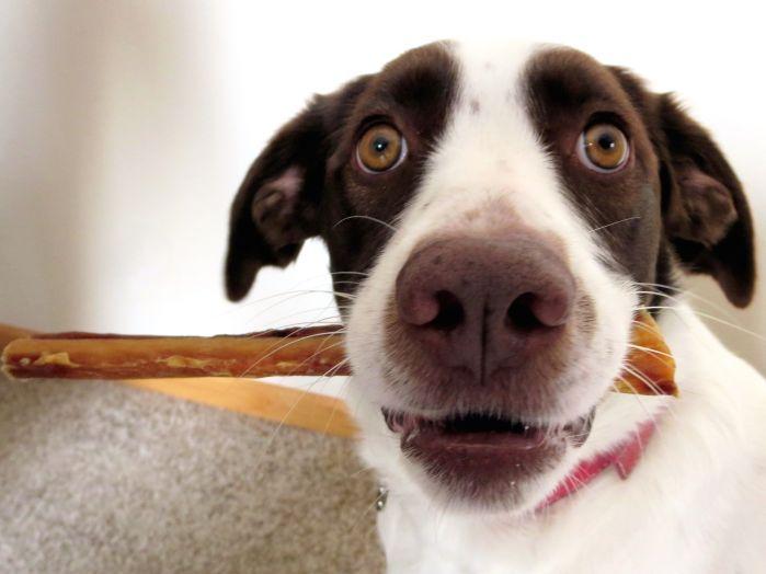 Rawhide: Healthy or harmful? Local veterinarian weighs in