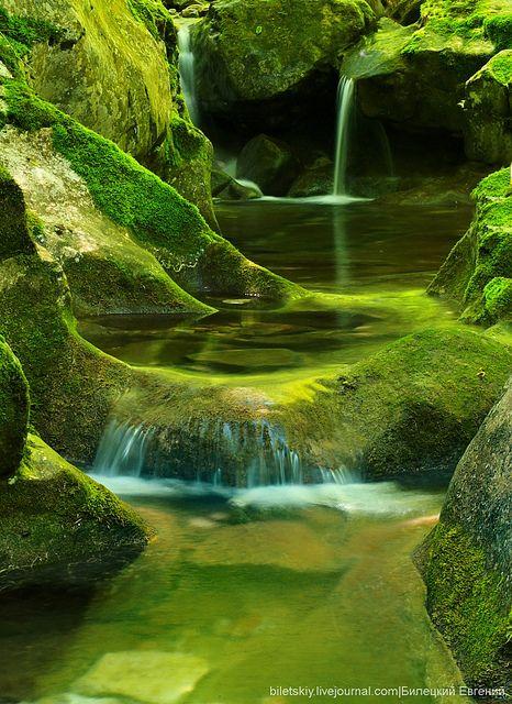 Moss by Evgeniy Biletskiy