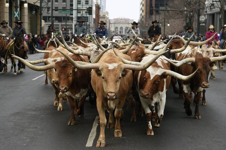 Live-cattle futures climbed as high as $1.4155 a pound before free-falling to…