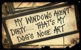: Nose Art, Dogs, Window, So True, Dog Nose, Animal
