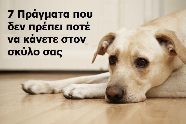 Δείτε ΤΙ πρέπει να Κάνετε αν σας Επιτεθούν Άγρια Σκυλιά στο Δρόμο! - Toocute.gr Το No.1 site κατοικιδίων στην Ελλάδα