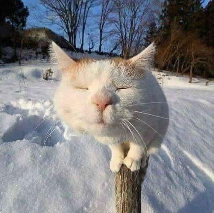 правило, применяют смешные картинки про начало зимы раз повторюсь, подпись