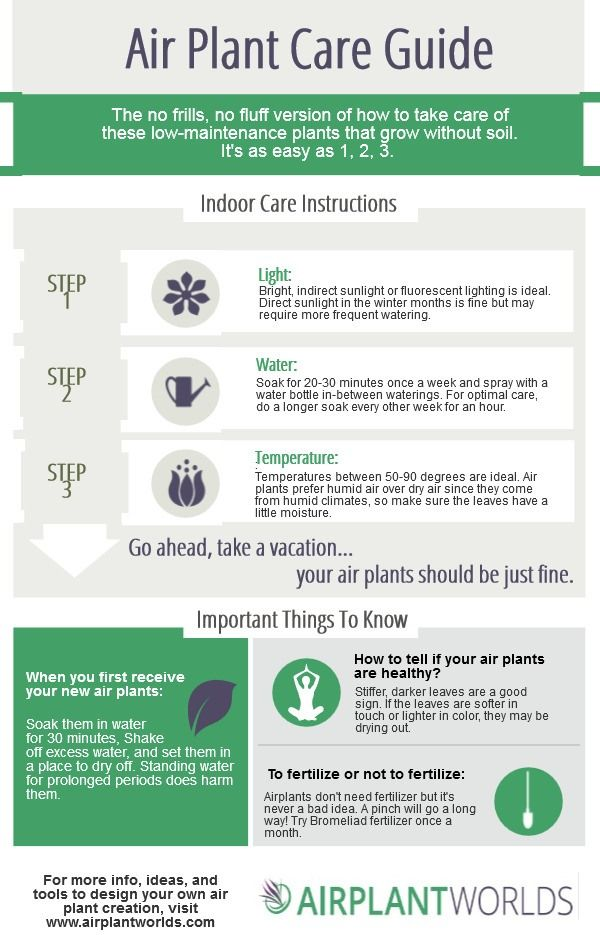 Air Plant Care instructions, in an infographic.  Easy to follow watering, temperature, and lighting info.