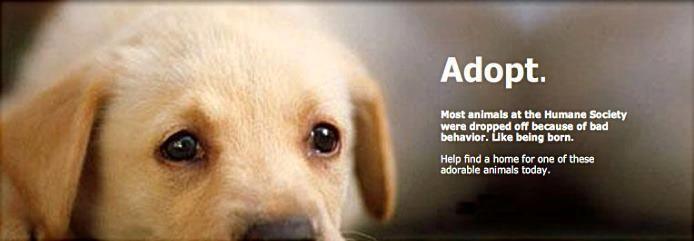 Grand Prairie Animal Shelter Adoptable Dogs