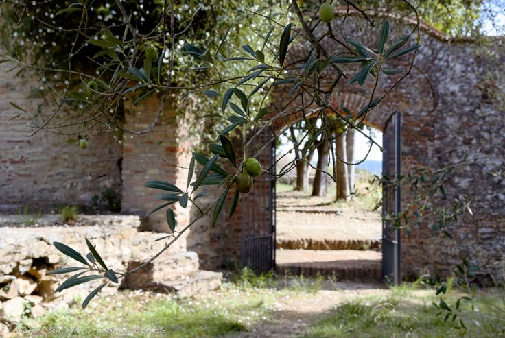 Olive trees and gardens and stone walls at  lacartujadecazalla.com twitter @cartujacazalla