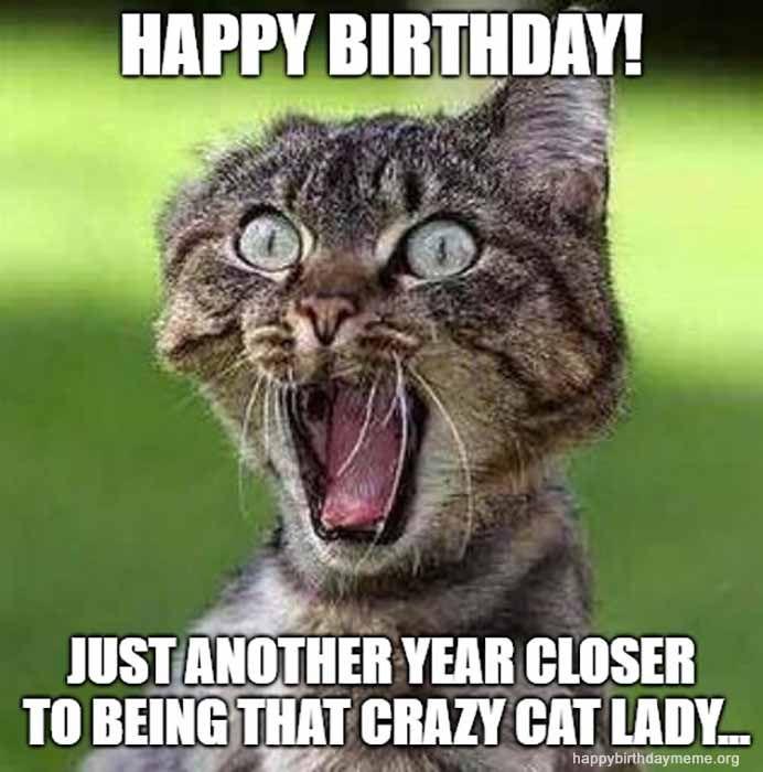 31 Funniest Cat Birthday Meme Freitag Lustig Lustige Bilder Freitag Bilder Lustig