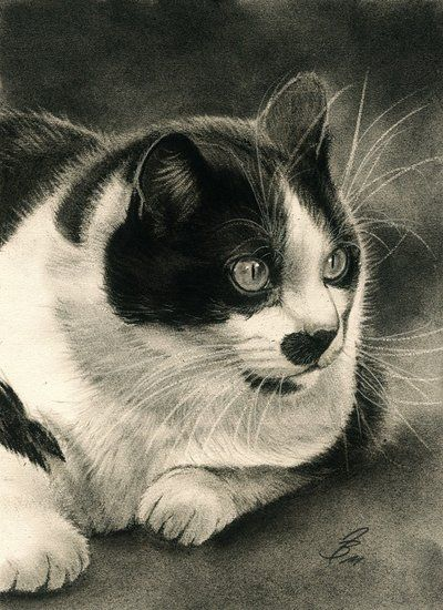 Tuxedo Cat in charcoal by Drehli on DeviantArt