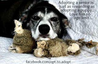Foster To Adopt Dog