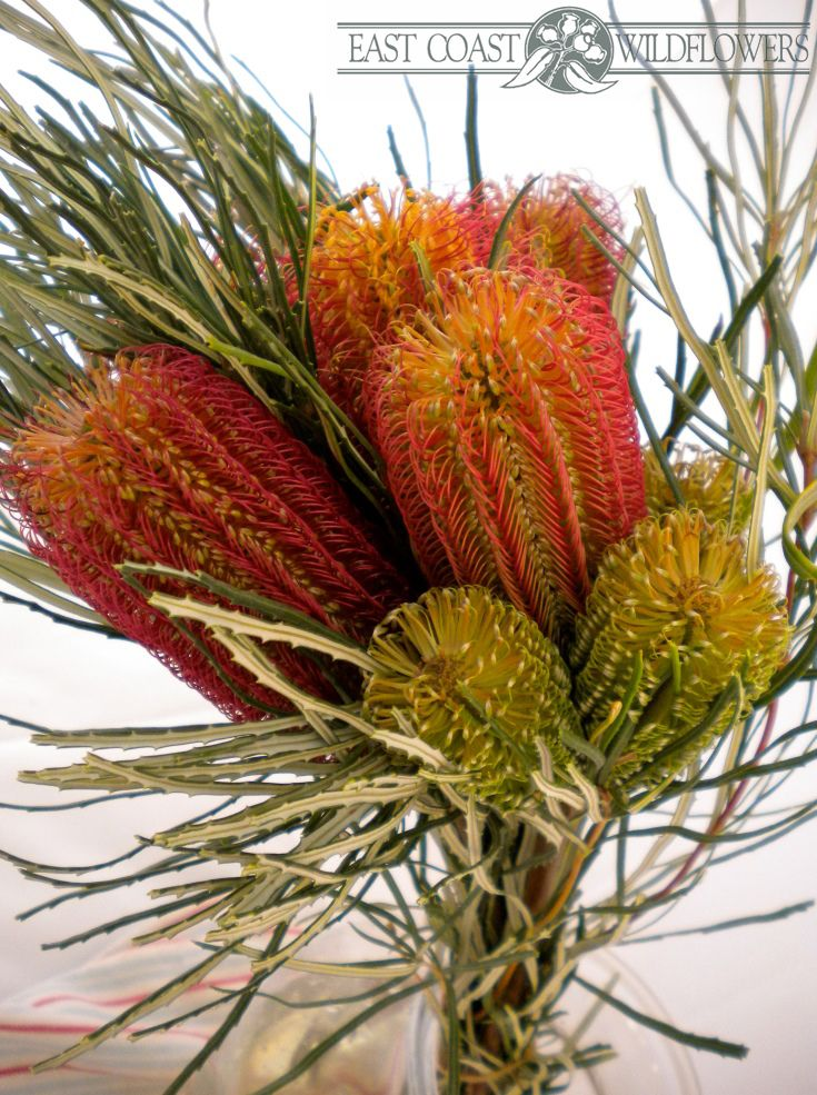 Mixed banksia bouquet with their own foliage - longlasting Australian native flower, ideal #flowersformen!