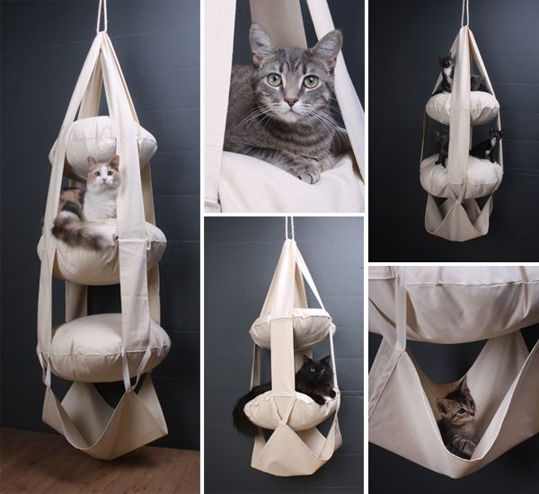 The Cats Trapeze