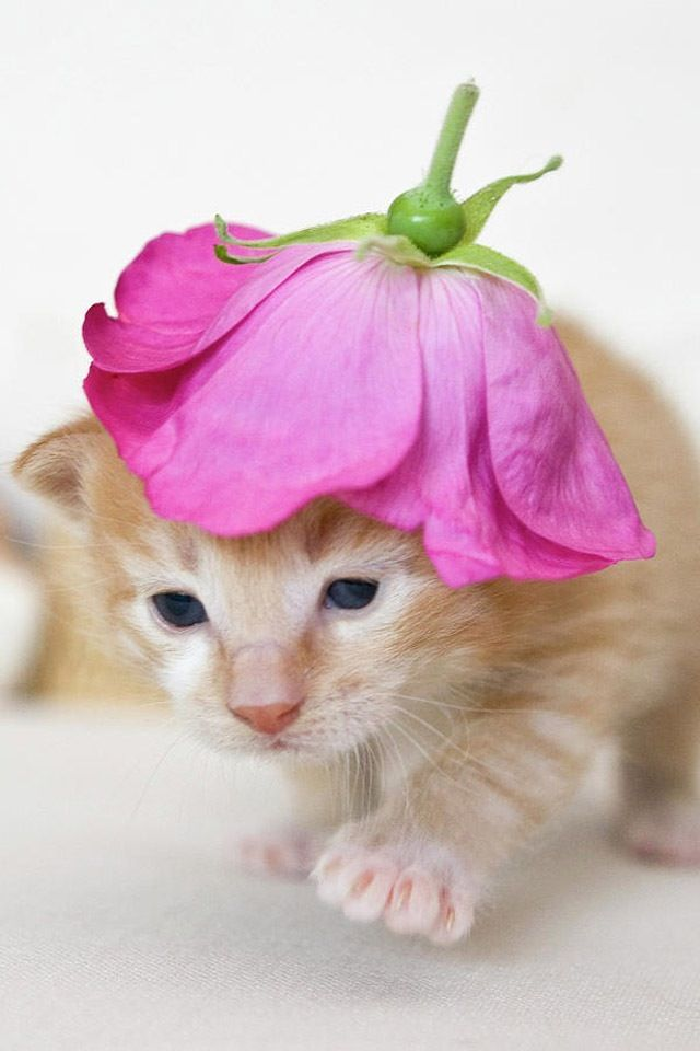 Does this rose make me look fat