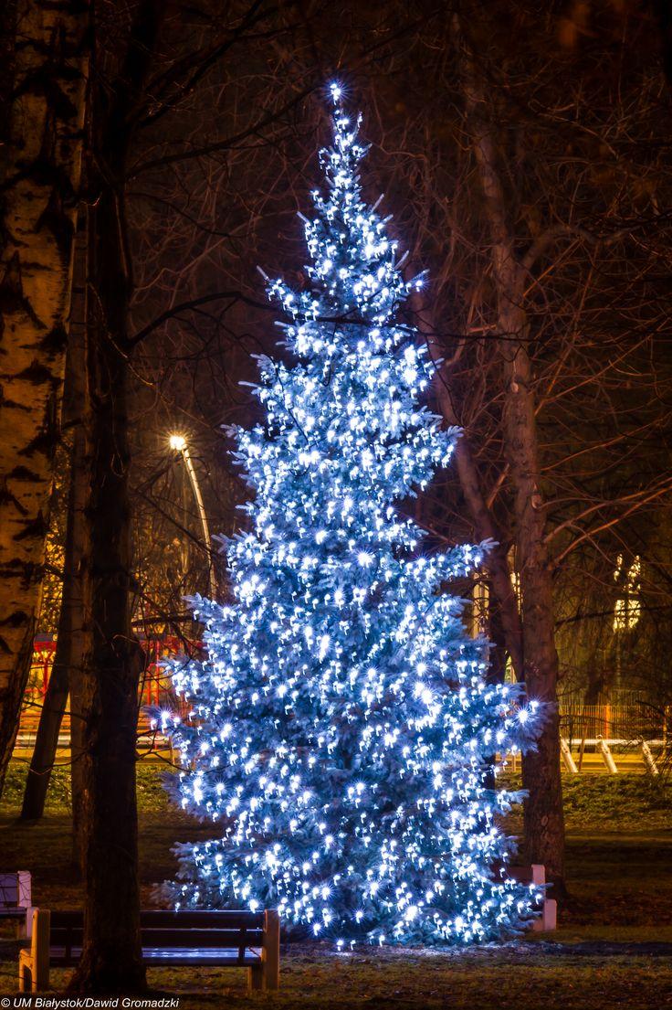 Świąteczne drzewko :) #2014 #Bialystok fot. Dawid Gromadzki
